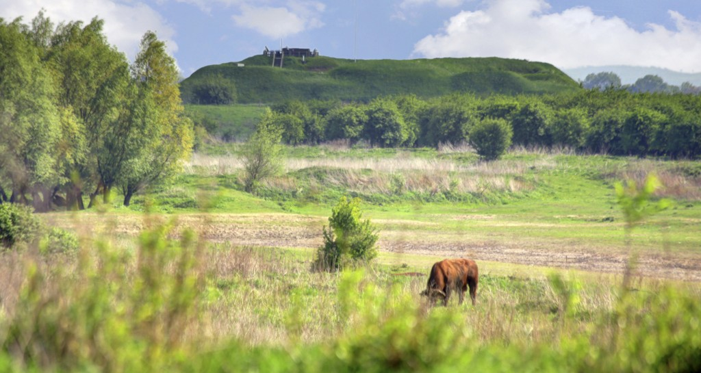 web-Fort Pannerden-omgeving_Lwaard0190
